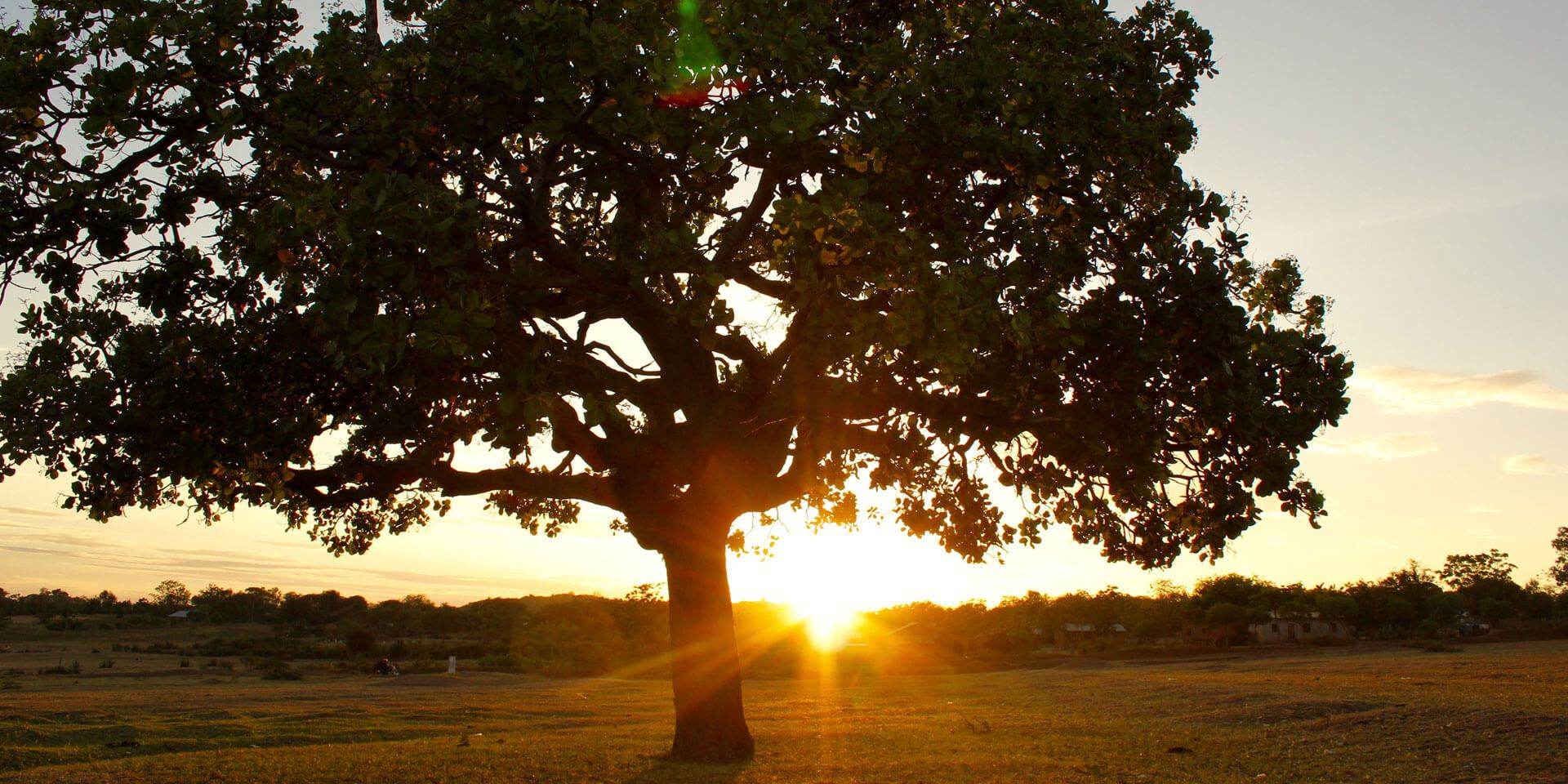 Photo of a tree with the sun setting in the background